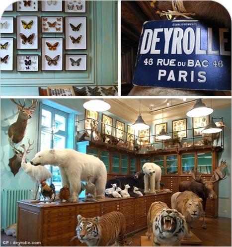 Bien connu La boutique la plus étrange de Paris – Vert Cerise - Blog DIY - Do  FN38